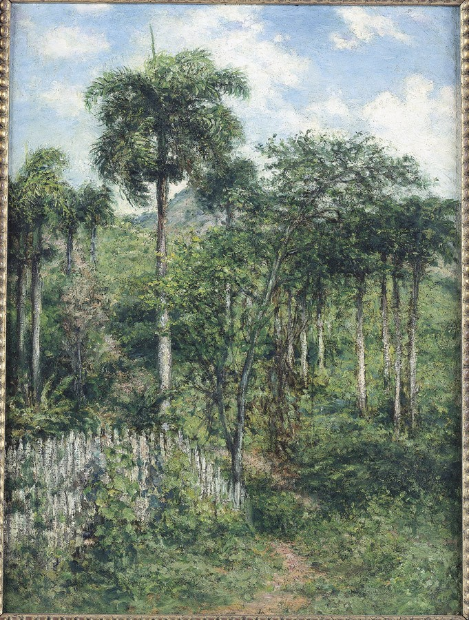 Landscape with Royal Palm