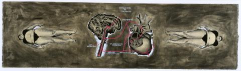 La anatomía según el tránsito de las palabras