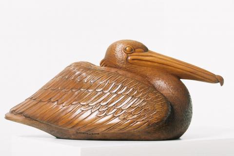 Pelicano echado
